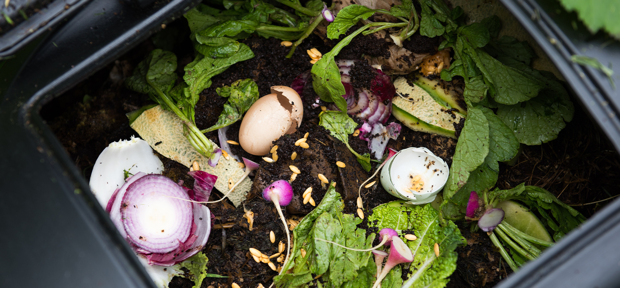 Image of food compost